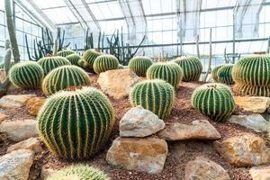 beau cactus dans le jardin du jardin botanique de la reine sirikit à chiang mai, thaïlande photo
