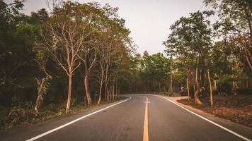 route goudronnée dans une forêt photo