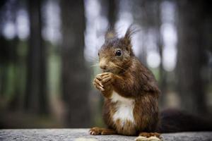 nourrir un écureuil photo