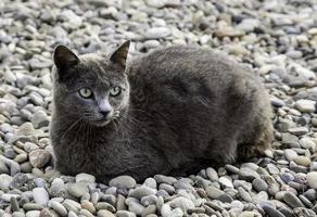 chat gris dans la rue photo