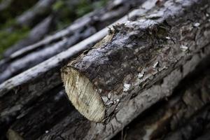 bûches de bois hachées photo