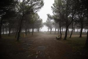 forêt sombre dans la brume photo