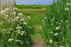 le noir pre wildflower nature reserve jersey royaume-uni photo