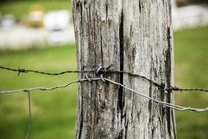 fil de fer barbelé sur bois photo