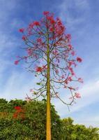 l'arbre aux fleurs rouges dans le ciel est la toile de fond photo