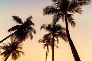 beau cocotier avec coucher de soleil dans le ciel crépusculaire photo