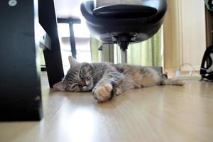 jeune chat tigré photo