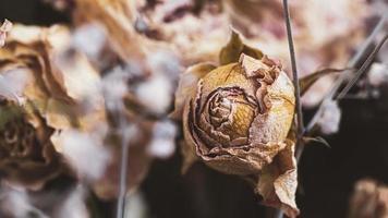 un bouquet de fleurs fanées séchées photo
