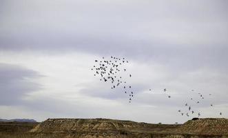 oiseaux volant dans le ciel photo