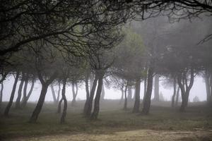 forêt avec brouillard photo
