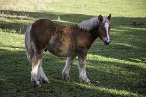 champ de chevaux sauvages photo