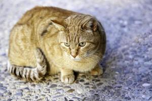 chat tigré orange photo
