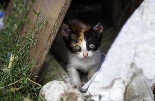 chatons abandonnés nature photo