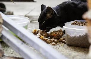 chats errants mangeant dans la rue photo