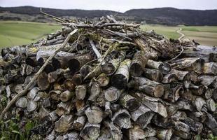 bûches de bois de chauffage photo