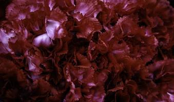 centre palefreniers roses photo