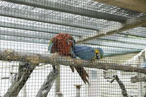 cage de perroquet ensemble photo