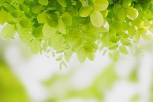 fraîcheur de la feuille verte photo