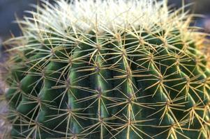 plante de cactus dans le parc photo