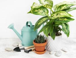 une maison plantes en pots de fleurs et arrosoir vert photo