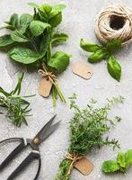 herbes fraîches sur fond de béton gris photo