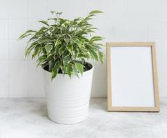 cadre d'affiche de ficus benjamin et maquette photo