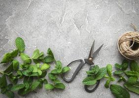 feuilles de menthe fraîche photo