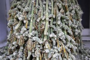 cactus tropical exotique photo