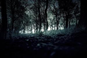 forêt de pins naturel photo