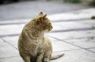 rue de repos chat orange photo