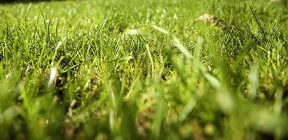 pelouse humide photo