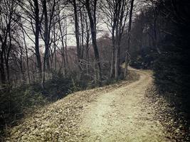 forêt dans la nature photo