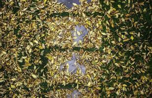 feuilles d'automne au sol photo
