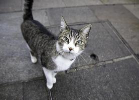 chat tigré regardant photo