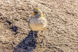 oiseaux brésiliens à l'extérieur photo