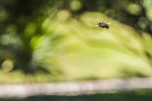 insectes brésiliens à l'extérieur photo