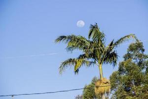 pleine lune brésilienne. photo