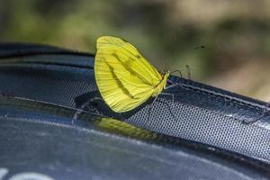 papillons et insectes photo