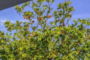 plantes d'extérieur brésiliennes photo