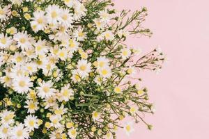chrysanthèmes disposés sur fond rose photo