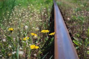Fleur jaune de pissenlit libre à côté du chemin de fer photo