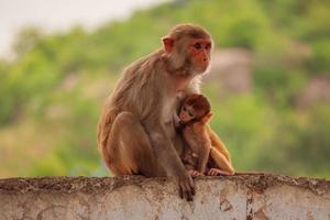 mère singe assis sur le mur avec bébé photo