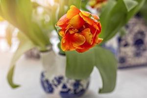 tulipe jaune-rouge dans un vase dans le jardin. printemps. floraison. photo