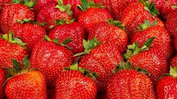 fraises fraîchement cueillies, fond de fraise, baie de saison photo
