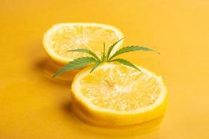 chanvre citronné, marijuana médicale avec saveur et arôme d'agrumes, quartiers de citron avec bourgeon de marijuana sur fond jaune photo