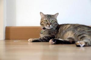 chat dans la maison photo