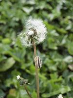 champ d'herbe fraîche photo