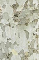 bois d'écorce d'arbre photo