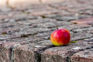 pomme rouge sur le sentier photo