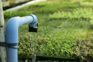 automatisation de l'écoulement de l'eau et des engrais du système hydroponique pour le potager de chêne vert photo